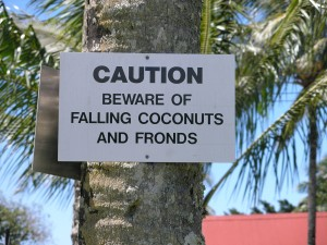 Hawaii Sign reads Caution: beware of falling coconuts and fronds