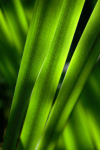 Green leaves by Steinar La Engeland from stocksnap.io