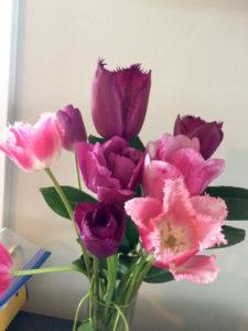 Tulips in vase by Judy K. Walker