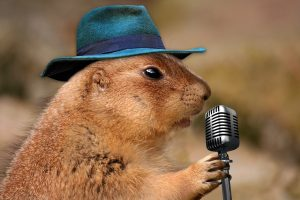 Groundhog in a fedora at a microphone