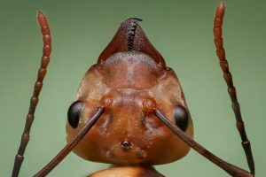 Close-up of ant head