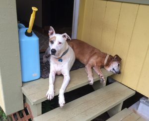 Our dogs Fred and Travis lying on the top step of our entry