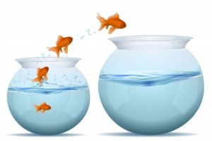 Goldfish jumping from one bowl to another