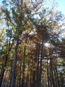 WV autumn leaves by Judy K. Walker