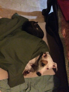 Cold Fred the Dog and Ninja Kitty sleeping together by Judy K. Walker