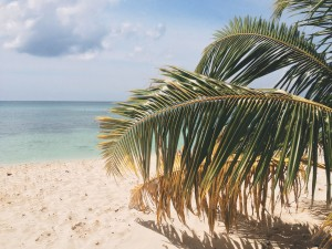 Sandy Beach with palm frond by John Price from stocksnap.io
