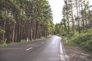 Rural pine road by Milada Vigerova from stocksnap.io