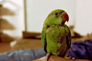 Parrot by Nabeel Syed from stocksnap.io