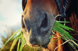 Horse eating grass by Bara Cross from stocksnap.io