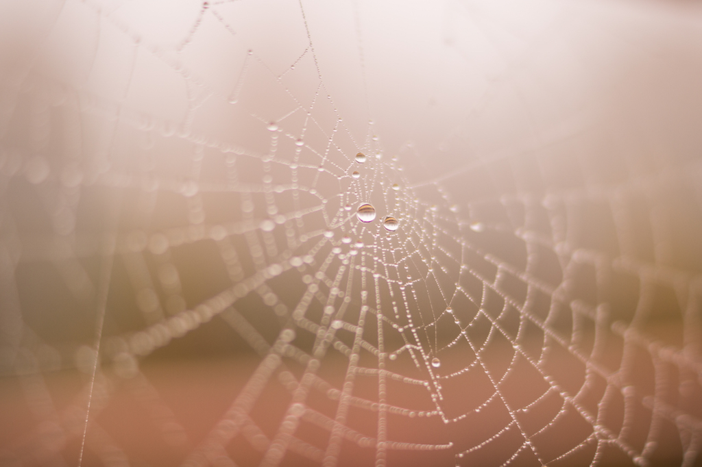Spider web with rain by Skitter Photo from stocksnap.io