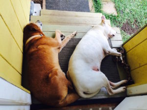 Our dogs Travis and Fred on the top step