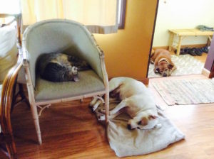 Two of our three dogs and the cat napping while it rains