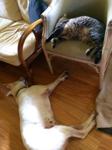 Fred the dog and Ninja Kitty napping by Judy K. Walker