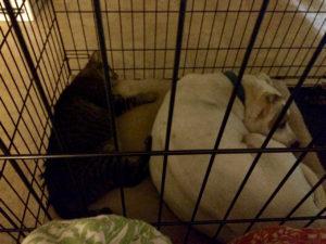 Sprawling Ninja Kitty behind a tightly tucked Fred