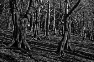Forest with spooky trees