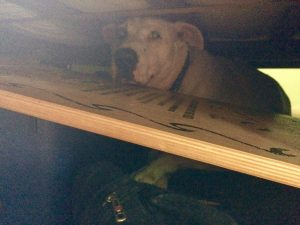 Our dog Fred hiding under the bed during a thunderstorm