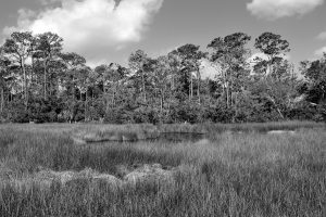 Black and white photo of Florida marshland by PaulBR75
