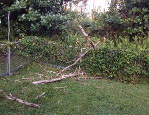 Ohia tree debris fallen over a chain link fence in East Hawaii January 2019