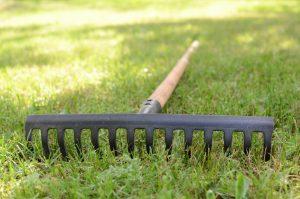 Rake lying on grass in the garden