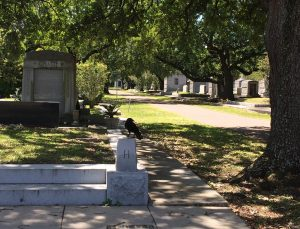 Crow perched on a marker in a Metairie, Louisiana, cemetery